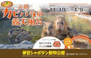 kapibara_03